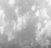 snowflakes supermakrosommar för 2009 blomma Royaltyfri Bild