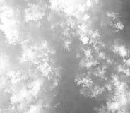 snowflakes supermakrosommar för 2009 blomma Arkivfoton