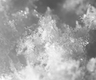 snowflakes supermakrosommar för 2009 blomma Arkivbilder