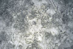 Snowflakes under microscope. Royalty Free Stock Image
