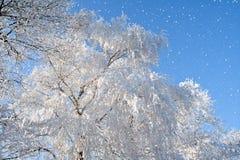 Snowflakes & white tree royalty free stock photography