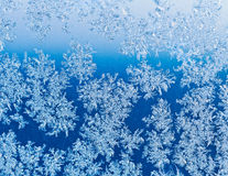 Snowflakes on window glass at blue winter sunrise Royalty Free Stock Photo