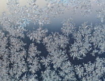 Snowflakes on windowpane at early winter dawn Royalty Free Stock Photography