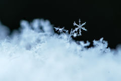 Snowflower. Close-up macro image of snow with a single snowflake highlighted Royalty Free Stock Photo