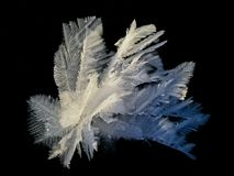 Snowflower em um fundo preto Imagem de Stock