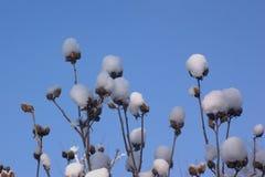 Snowflowers Photographie stock