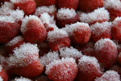 Snowfrosted strawberries. Right from the fridge Stock Images