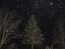 Snowglobe Fotografia Stock