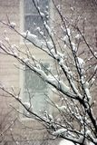 Snowing. Outside of the window, tree covered with the snow royalty free stock images