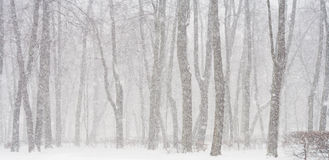 Snowing Stock Images