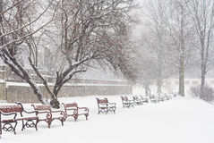 Snowing. Red benches in row covered with snow. Snowing royalty free stock photos