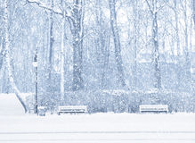 Snowing. Two benches, lantern and trees during snowing. Blue tone stock photo
