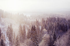 Snowing. In the winter woodland royalty free stock photos