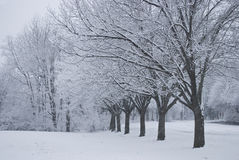 Snowing. A heavy snow coats the trees in this Manalapan, New Jersey park Royalty Free Stock Photography