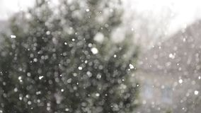 Snowing abstract. Defocused bokeh with tree background. Snow falling with blurred winter landscape in backdrop stock video