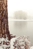 Snowing along the Bow River Royalty Free Stock Image
