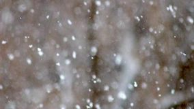 Snowing day in focus stock video footage