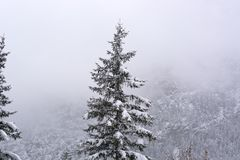 It is snowing on the Dolomites stock photography