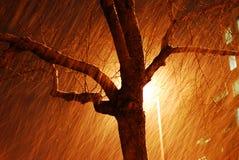 snowing för natt Arkivbild