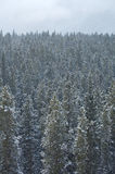 Snowing in forest 02 Royalty Free Stock Photography