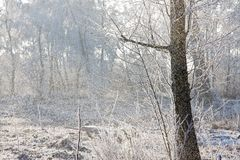 Snowing in a forest with the bright sun shining Stock Images