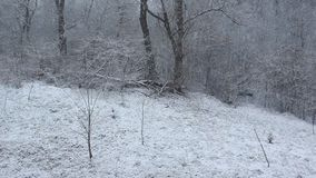 Snowing in the forest stock footage