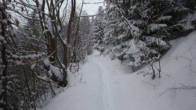 Snowing in a forest path in winter season. In Romania stock video