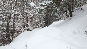 Snowing in a forest path in winter season. In Romania stock video footage