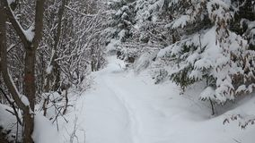 Snowing in a forest path in winter season. Snowing in a wild forest path in the winter season stock video footage
