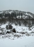Snowing Forest. View of trees during snowing. Winter scene near a forest Royalty Free Stock Images