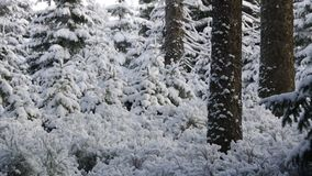 Snowing in forest stock video footage
