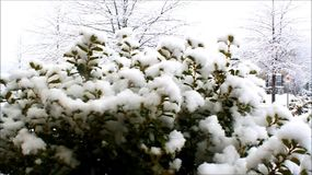 Snowing stock footage