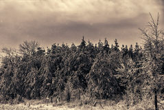 Snowing on Ice Covered Forest Landscape stock image