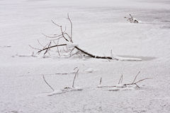 Snowing landscape. Details on the branches Stock Image