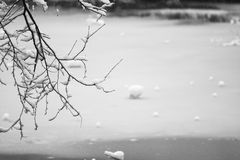 Snowing landscape. Details on the branches Royalty Free Stock Photography