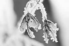 Snowing landscape. Details on the branches Royalty Free Stock Images