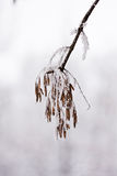 Snowing landscape. Details on the branches Stock Photography