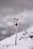 Snowing landscape. Details on the branches Royalty Free Stock Photos