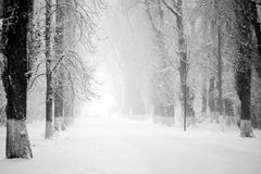Free Snowing Landscape In The Park Stock Images - 76402584