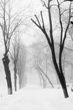 Snowing landscape Stock Photos