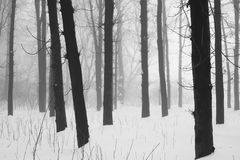 Snowing landscape Stock Photography