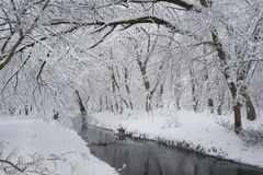 Snowing landscape. In the park Stock Image