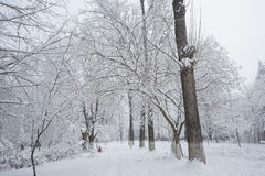 Snowing landscape. In the park Royalty Free Stock Images