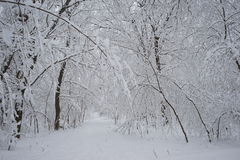 Snowing landscape. In the park Royalty Free Stock Image