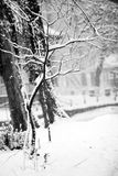 Snowing landscape in the park Stock Images