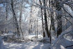 Snowing landscape in the park. Snowing, beautiful landscape in the park Stock Photo