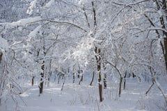 Snowing landscape in the park. Snowing, beautiful landscape in the park Royalty Free Stock Photography