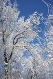 Snowing landscape in the park. Snowing, beautiful landscape in the park Royalty Free Stock Image
