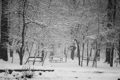 Snowing landscape in the park. Snowing, beautiful landscape in the park Royalty Free Stock Photo