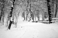 Snowing landscape in the park. Snowing, beautiful landscape in the park Stock Photos